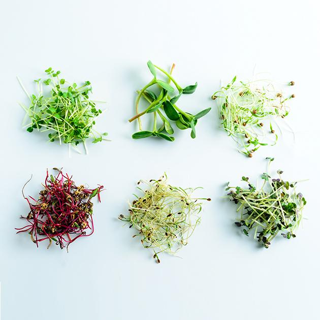 microgreen dill sprouts, radishes, mustard, arugula, mustard